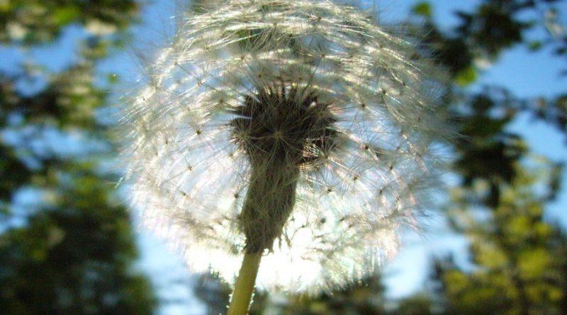 фотоконкурс «Природа – книга Божия»